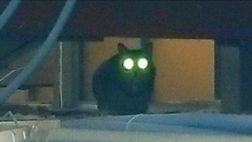 Una gata deambula por un aeropuerto de Nueva York y esquiva la persecución policial por una semana