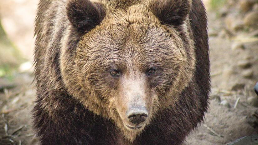VIDEO: Un oso mata a un taxista que paró para hacerse un selfi con él (18+)