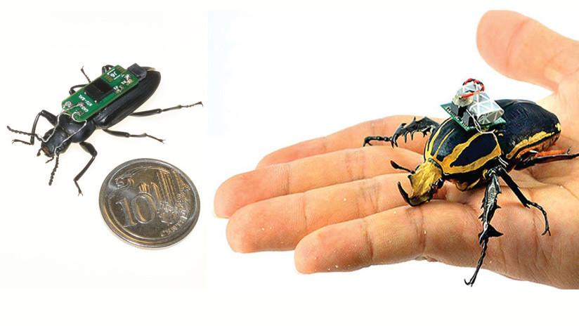 Científicos convierten escarabajos en cíborgs voladores que podrían salvar vidas en el futuro