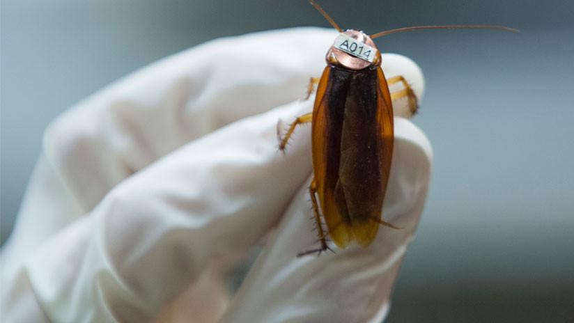 FOTO: Una mujer vivió más de una semana con una cucaracha en el oído