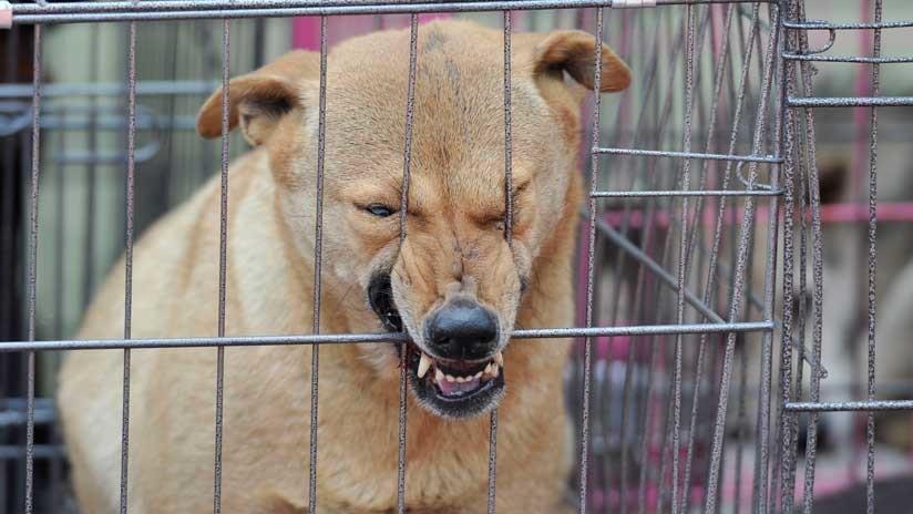 Jaurías de perros callejeros matan a varios niños en una ciudad de la India