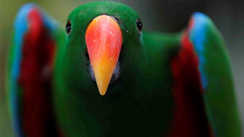 Colombia se avizora campeona mundial en avistamiento de aves por segundo año consecutivo