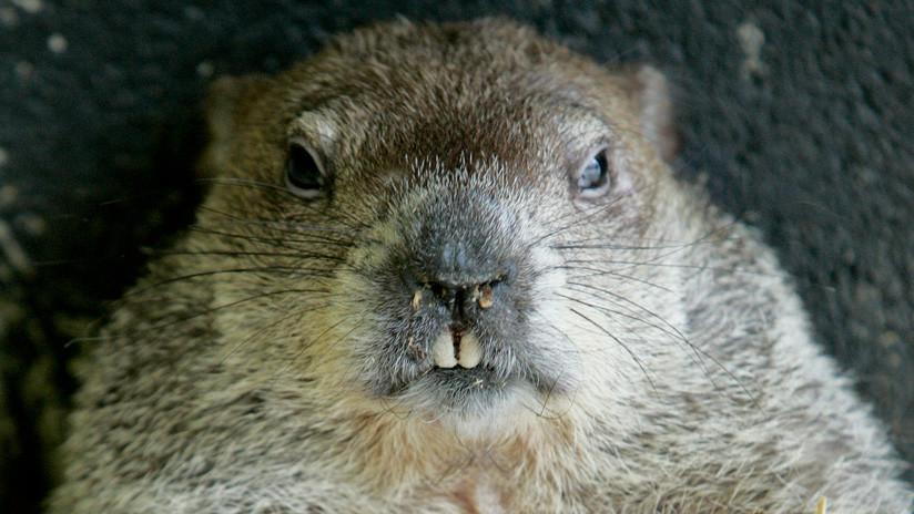 """VIDEO: Un policía mata a una marmota en una carretera por considerar que """"no actuaba normal"""""""