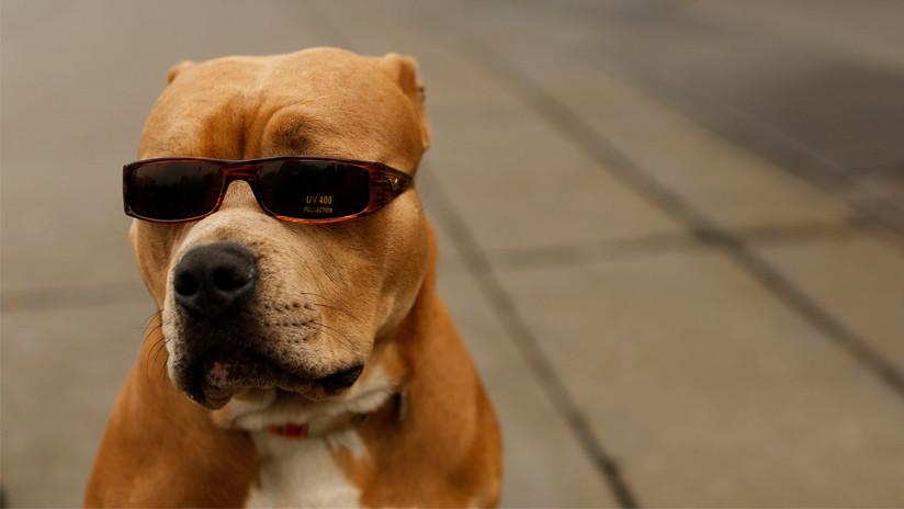"""¡Mi perro me disparó!"": Un estadounidense herido de bala por su mascota"