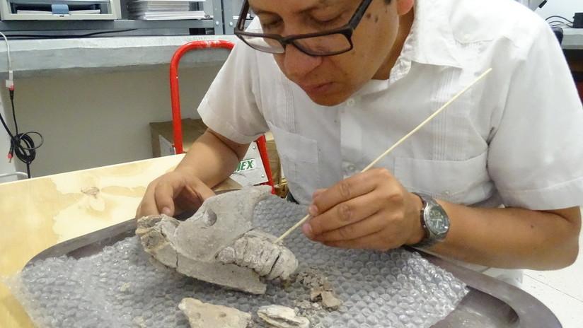 México: Descubren restos de mamuts y otras especies de la Edad de Hielo