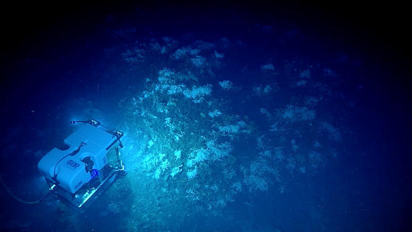Viaje a lo inexplorado: Impresionantes imágenes del fondo marino del golfo de México (VIDEO)