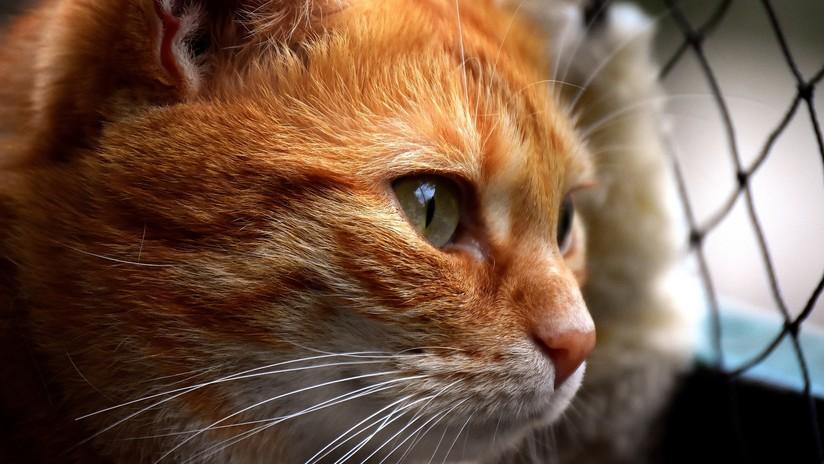 VIDEO: Un gato 'cortés' golpea la puerta de su casa para que lo dejen entrar