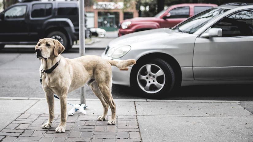 México: Amarran un perro a un auto y lo arrastran bajo la lluvia (VIDEO)