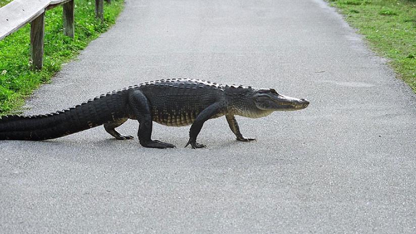 El 'Hombre Pollo' de Carolina del Sur paga feliz una multa por salvar a un cocodrilo
