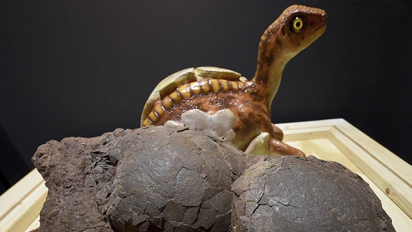 ¿Cómo hacían los dinosaurios para incubar los huevos sin aplastarlos?