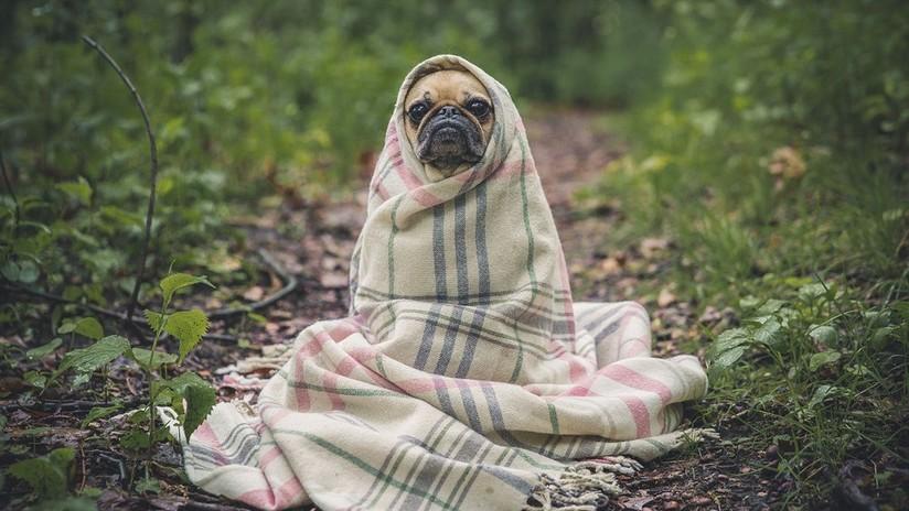 Una 'startup' secreta de Harvard experimenta con los perros para hacernos 'inmortales'
