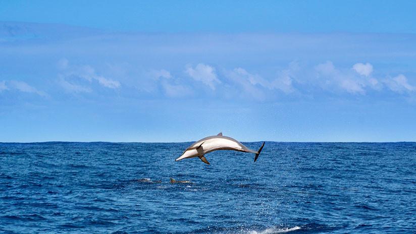 ¿Cocodrilos con aletas de delfín?: Descubren una nueva especie de 180 millones de años de antigüedad