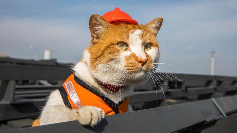 The Washington Post: El puente de Crimea no lo inauguró Putin, sino... ¡un gato! (FOTO)