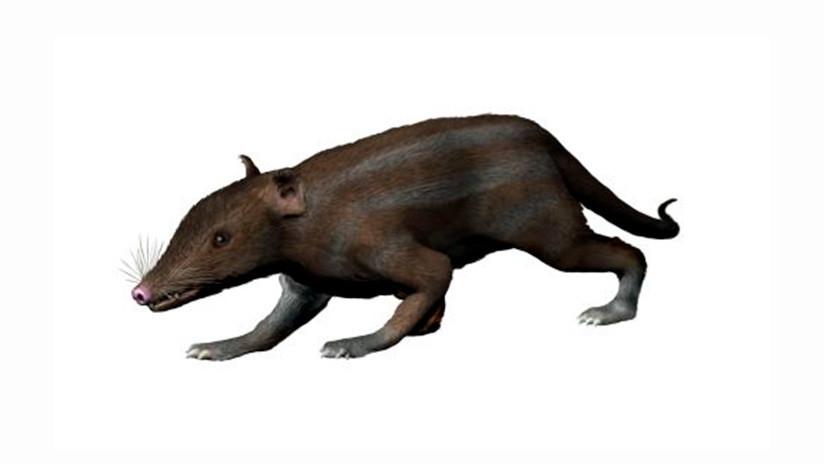 Descubren cuál fue la comida esencial de nuestros antepasados mamíferos en tiempos de dinosaurios