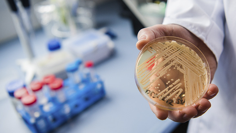 Hongos peligrosos: La resistencia a los medicamentos antimicóticos pone en peligro la salud humana