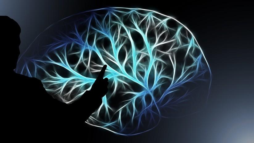 Descubren que el nivel de ingresos de una persona está relacionado con la anatomía de su cerebro