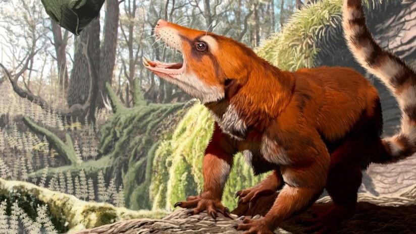 Hallan fósil de un mamífero que obliga a replantear uno de los mayores procesos geológicos