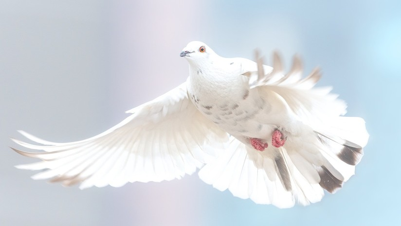 VIDEOS: Una paloma 'muerta' da un toque fúnebre a una solemne ceremoniaescolar