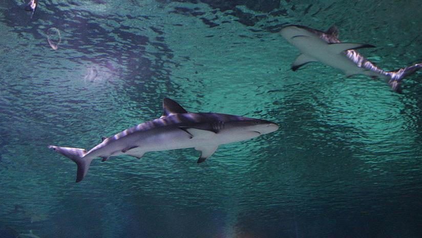 ¿El viejo y el mar? Un tiburón pasea a un pescador en un kayak (VIDEO)
