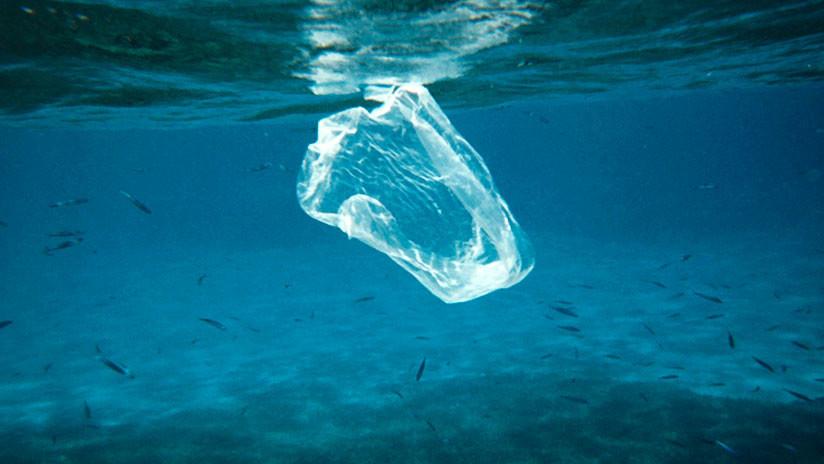 Estudio: El plástico de los océanos puede ser transferido a la cadena alimenticia