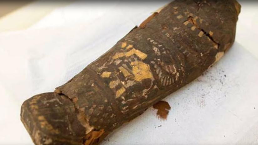 Un escáner muestra que una momia egipcia de halcón no es nada de lo que se creía hasta ahora
