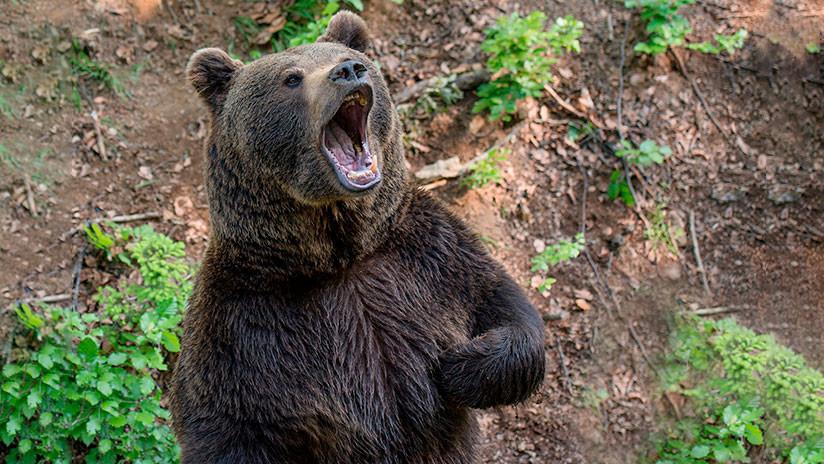 VIDEO: Un patrullero persigue y espanta con la sirena a un oso en un patio de juegos en Rusia