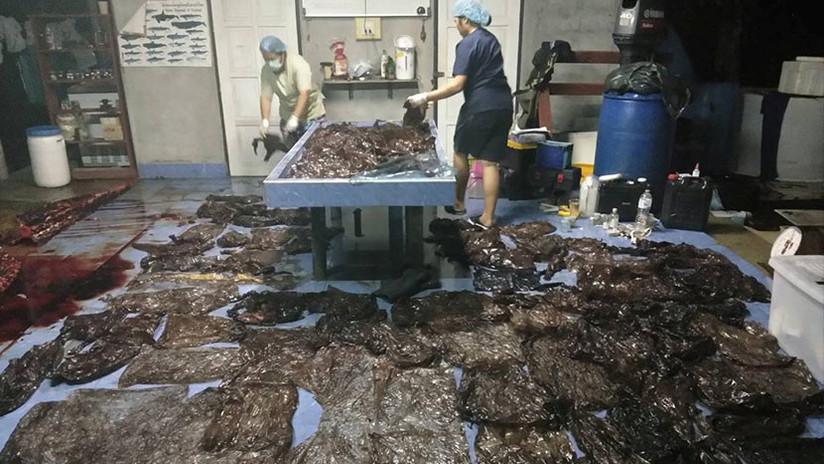 IMÁGENES IMPACTANTES: Una ballena muere en Tailandia con 80 bolsas de plástico en el estómago