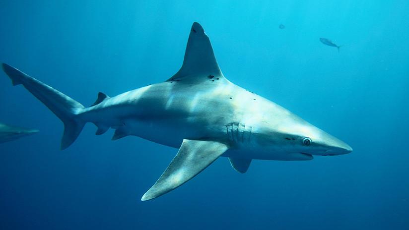 FUERTE VIDEО: Un joven muere en Brasil después de que un tiburón le muerda la entrepierna
