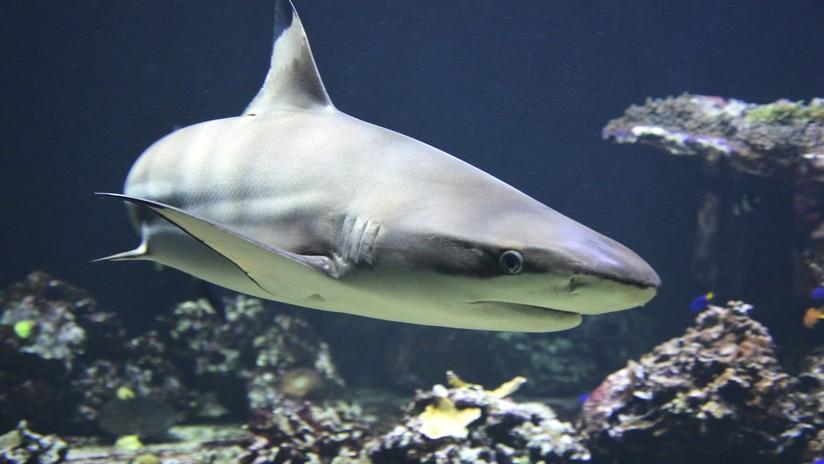 VIDEO: Un osado pescador arrastra a un tiburón vivo al agua por la cola