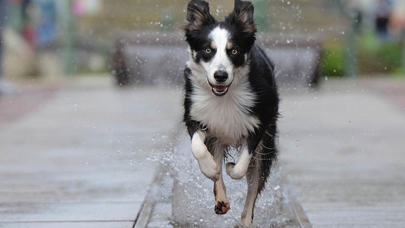 VIDEO: La felicidad de este perro que se zambulle en una fuente conquista a millones de usuarios