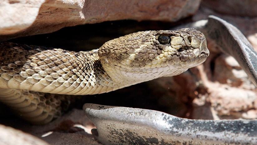 FUERTES IMÁGENES: Un hombre casi muere por la mordedura de una serpiente que acababa de decapitar