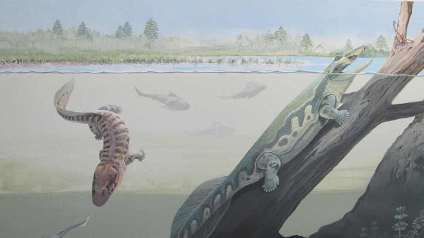 Hallazgos fósiles en Sudáfrica disipan el mito 'tropical' de la evolución animal