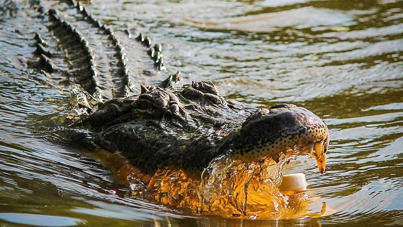 VIDEO: Un peligroso reptil acecha a un niño mientras juega con un cocodrilo inflable