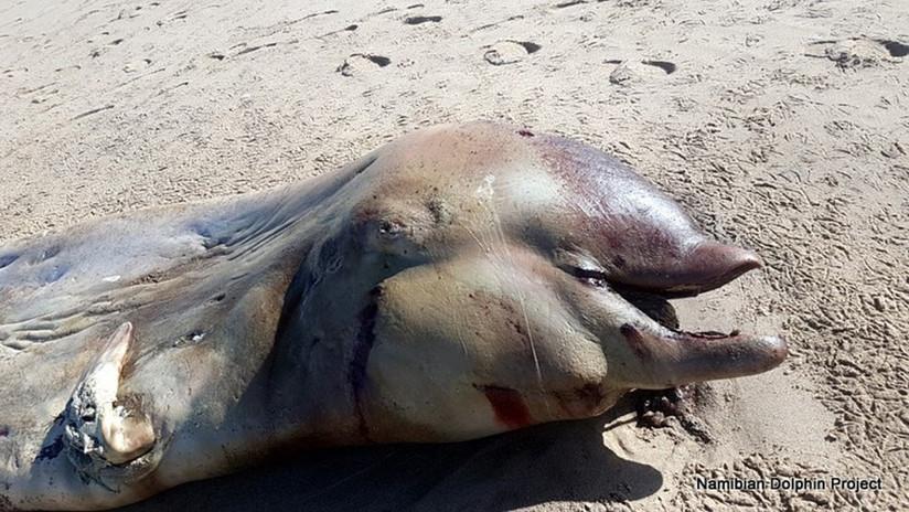 Logran científicos identificar a criatura marina varada en playa de África