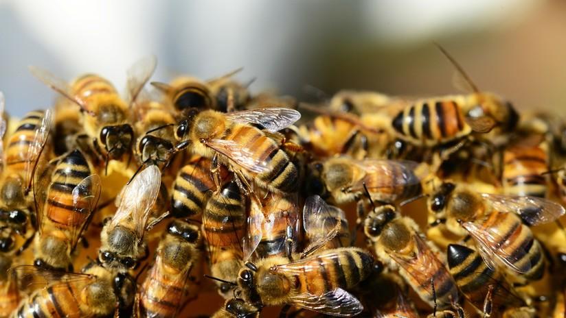 ¡Todos al suelo! Insólito ataque de abejas paraliza un partido de fútbol en Ecuador (VIDEO)