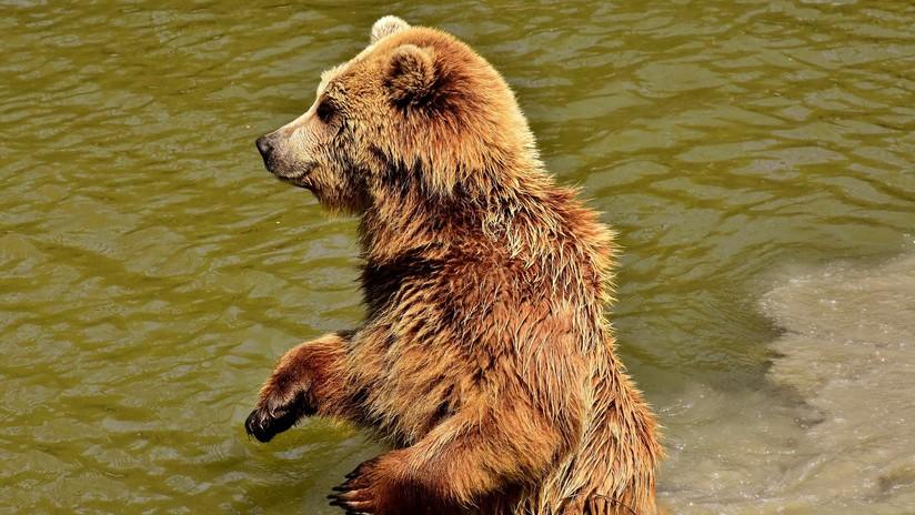 Graban últimos minutos de vida de su amigo; lo persiguió un oso
