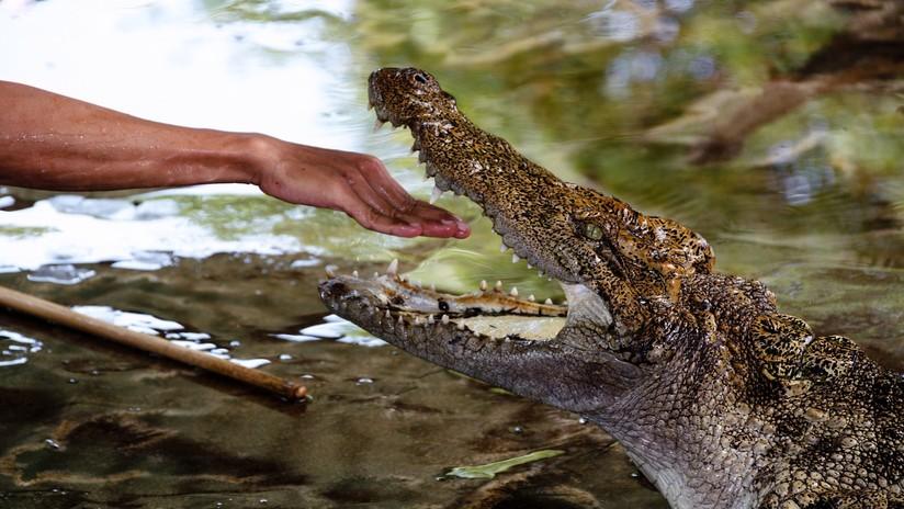 FOTO: Le propone matrimonio a su novia dentro de un estanque con cocodrilos y por poco le sale caro