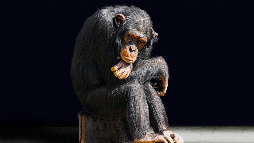 VIDEO: Un popular bloguero hace fumar a un mono y las redes se indignan