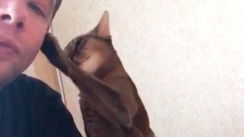 VIDEO: Un gato le muestra todo su afecto a su dueño… para conseguir un apetitoso pollo asado