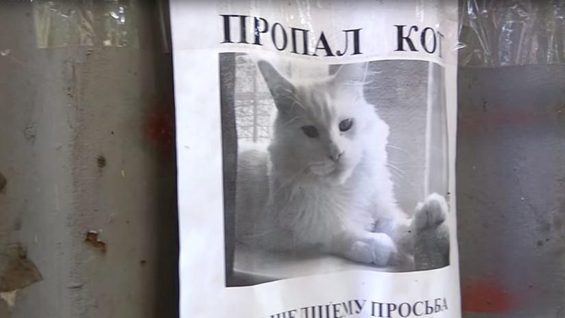 'Mona Lisa a lo felino': Un anuncio sobre un gato perdido enloquece las redes por una ilusión óptica