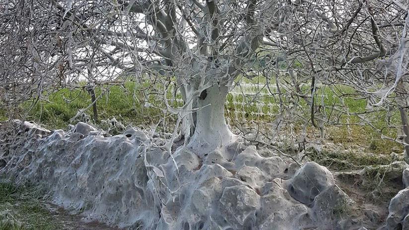 Video, foto: Hallan en Inglaterra un tétrico árbol
