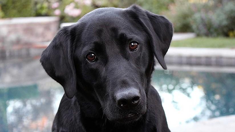 FUERTE VIDEO: Angustioso rescate de un perro a punto de morir estrangulado por una boa