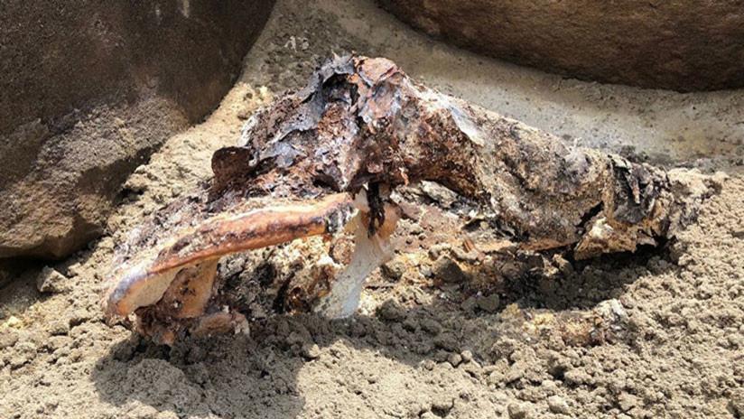 FOTO: Hallan una momia del siglo I a.C. en la zona inundada de una central hidroeléctrica rusa