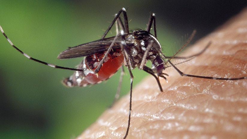 Encuentran en EE.UU. un virus nunca antes detectado en personas