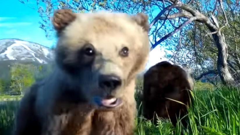 VIDEO: Un osezno se toma un entrañable video 'selfie' en Rusia