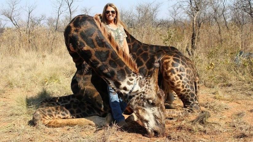 """Indignación en las redes por la """"neandertal"""" de EE.UU. que mató una rara jirafa negra en Sudáfrica"""