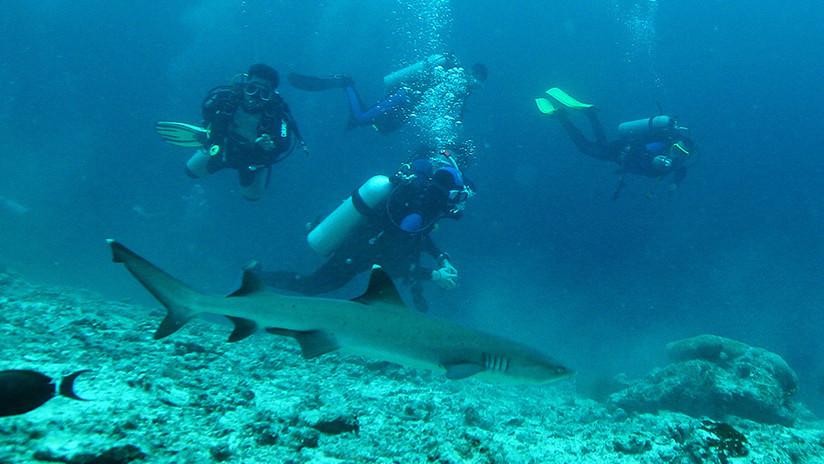 VIDEO: Un instructor de buceo impide que un tiburón muerda a su alumno