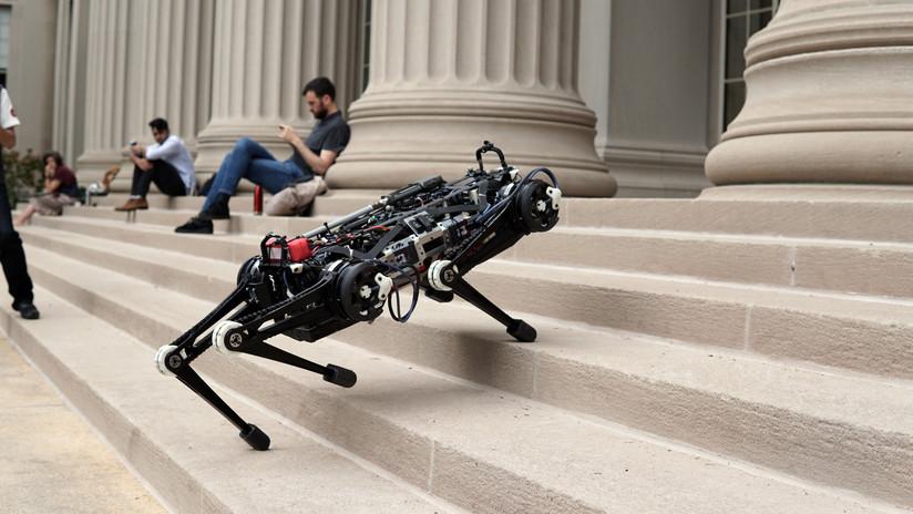 VIDEO: Un perro robot muestra su increíble equilibrio con varios ejercicios a ciegas