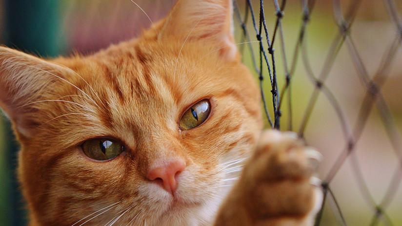 VIDEO: Un gato arruina la entrevista en vivo a un académico y se hace viral