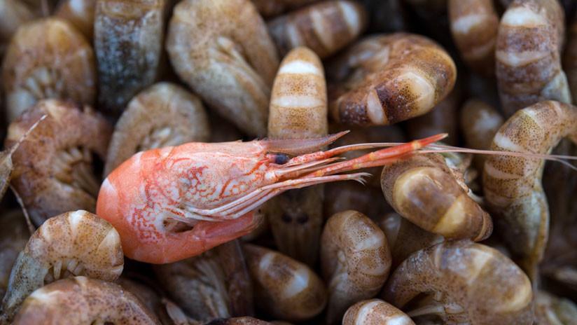 Hallan restos de sustancias químicas tóxicas en gambas de Suecia